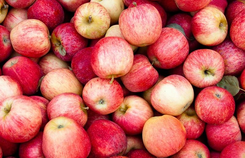 Джеймс Янг и сахарные горные яблоки
