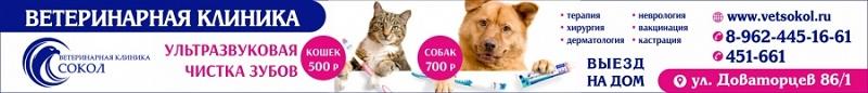 Ветеринарная клиника «Сокол» из Ставрополя реклама